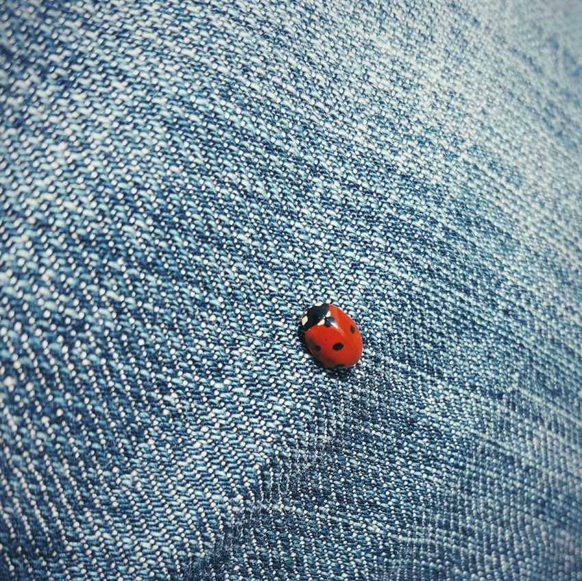 Ladybug Ladybug Insects  Insect Photography Insect Insekten Jeans