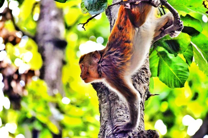 Tree Nature Animal Themes Animals In The Wild EyeEmNewHere Monkey Animals In The Wild