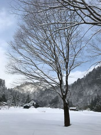 Winter Wintertime Winter Trees Snow ❄ Japanese Style Japanese Country Fukui Prefecture White