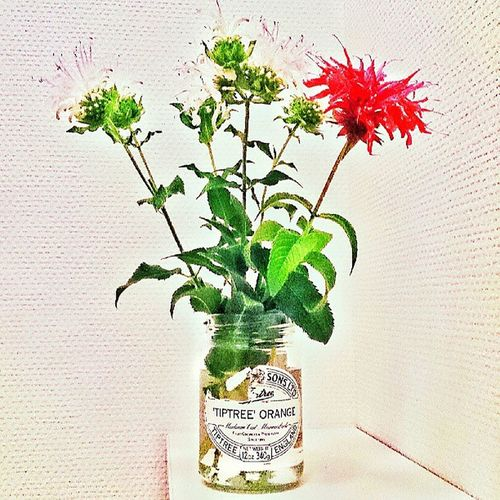 Empty bottle of marmalade Bottle Flower Red Marmalade 瓶 空き瓶 マーマレイド 赤い花 花