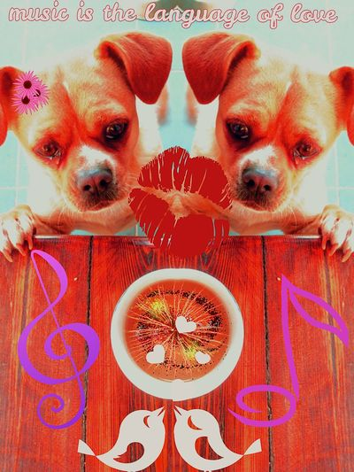 Two Is Better Than One Birds Eye View Eyeemphoto Music Color Palette Music Brings Us Together Pet Photography  Animal Photography Animal Themes Steamzoofamily Natures Diversities Eye For Photography Color Of Life Cheese! Takeoverinspiration Its All In The Details Color Portrait Getting Creative Details Textures And Shapes What You Make It  Different Is Better . ❤ An Original My Take On Life Puppy Love ❤ Internet Addiction