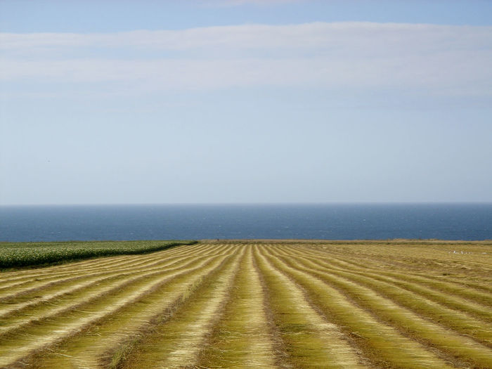 A field by the sea. Agriculture Beauty In Nature Day Environment Field Horizon Horizon Over Water Land Landscape No People Rural Scene Sky Tranquility Water