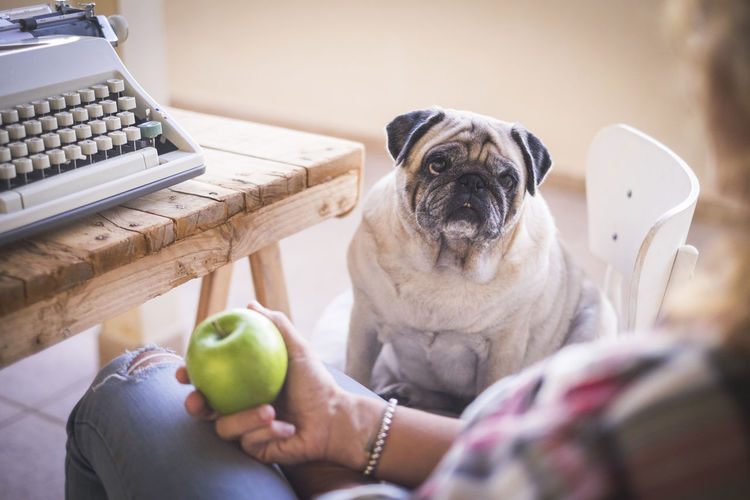 Midsection Of Woman Holding Granny Smith Apple While Sitting With Dog At Home