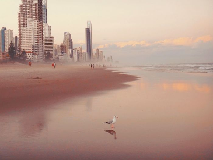 Seagull Perching On Shore At Beach Against Sky