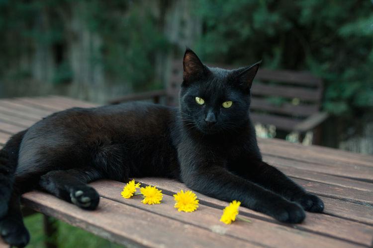 Portrait of cat lying on wood