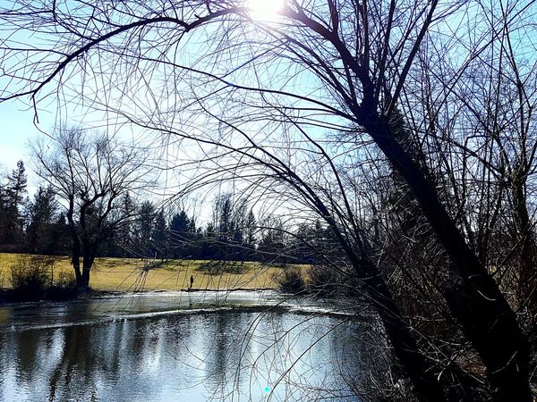 Sunny Winterday Berliner Ansichten Berlin Winter Full Frame Backgrounds Reflection Water Pattern No People Day Nature Tree Outdoors Beauty In Nature Sky