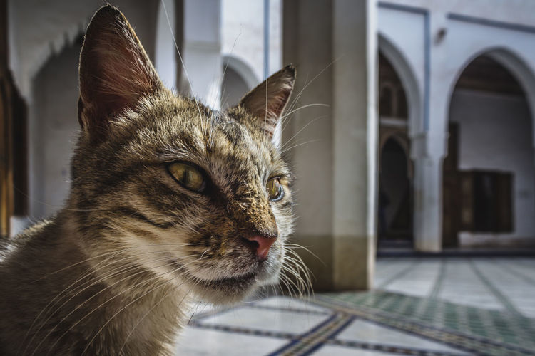 The castle's cat Animal Animal Eye Animal Themes Architecture Archs Castle Cat Cats Close-up Culture Cute Eyes Face Green Growth Indoors  Light Marrakech Marrakesh Morocco Old Pet Pets Travel Wildlife