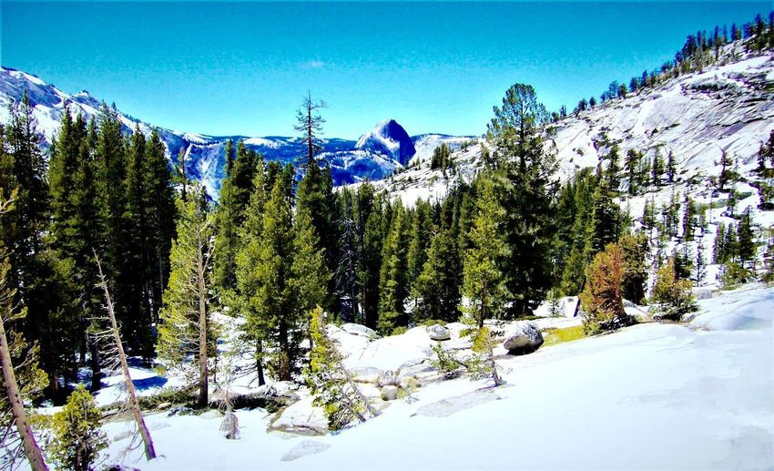 Half Dome 🏞⛺️✨ Plant Tree Sky Nature Beauty In Nature Growth My Best Photo Scenics - Nature No People Tranquility Snow Cold Temperature Winter Tranquil Scene Mountain Sunlight Covering Land Snowcapped Mountain Outdoors Tree Plant Winter Beauty In Nature Tranquility Land Nature Pine Tree Environment Non-urban Scene