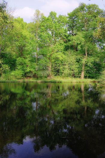 Bäume am See mit Spiegellung Water Tree Reflection Close-up
