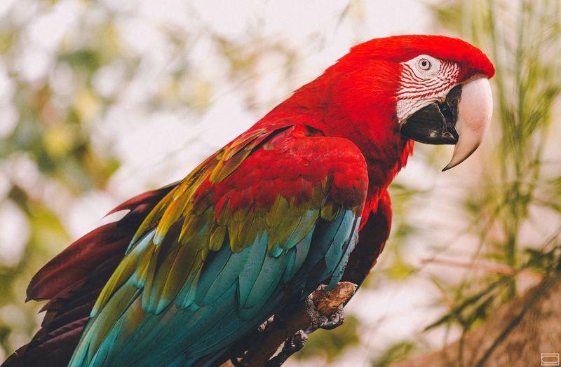 A color parrot