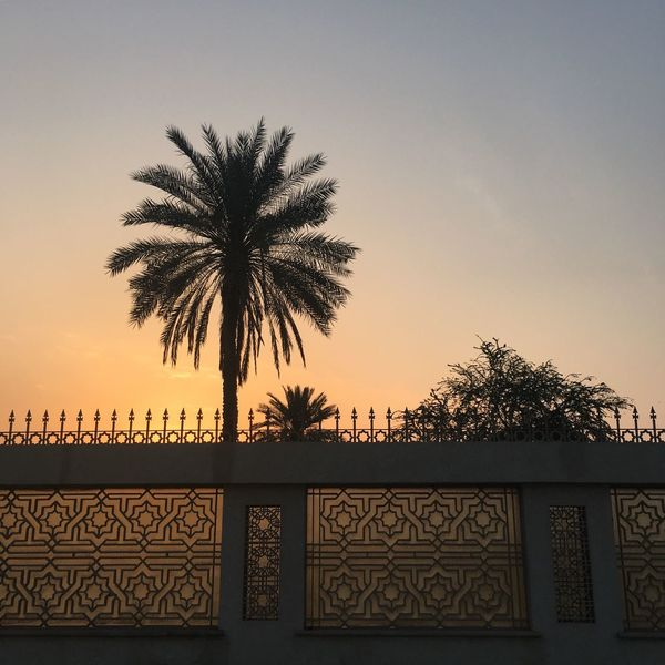 The golden hour of beauty at its finest. Chadventurestories Dubai UAE Tree Palm Tree Sunset Silhouette Clear Sky Sky Architecture No People Low Angle View Built_Structure Outdoors Day EyeEm Best Shots EyeEm Nature Lover EyeEmNewHere EyeEm Gallery EyeEm Photography Let's Go. Together.