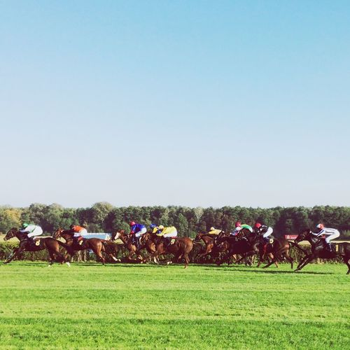 Horse Racing On Grassy Field Against Clear Sky