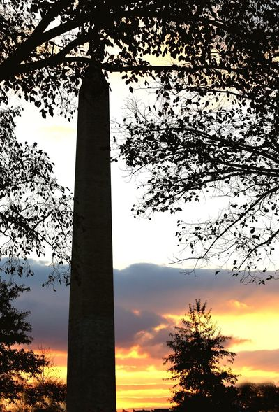 Sunrise over Washington, DC Tree Sunset Tree Trunk Sky Orange Color Growth Low Angle View Silhouette Beauty In Nature Nature No People Tranquility Tranquil Scene Scenics Outdoors Branch Day Washington, D. C. JGLowe Washington Monument Travel Destinations Travel