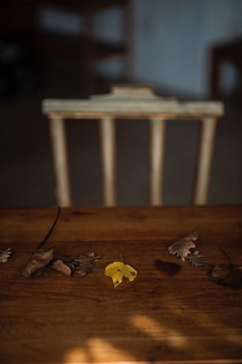 Wood - Material Table Indoors  Still Life No People Close-up Selective Focus Creativity Dry Nature Yellow Day Wood Leaf Plant Part Pencil Shavings Education Seat Surface Level Brown