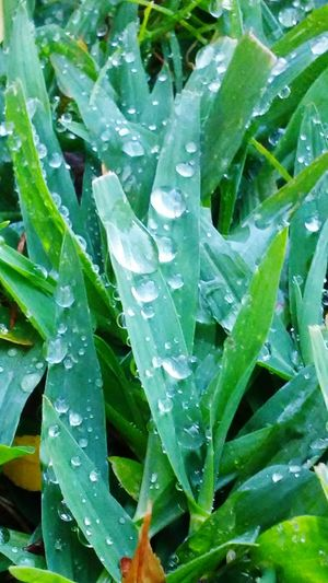 Morning due. SecondDayOfFall Wetgrass Beautiful Nature