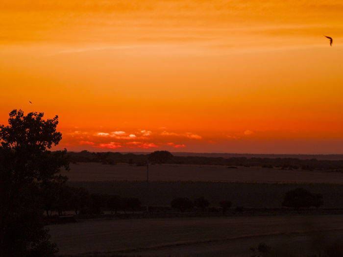 Landscape_Collection Pasture Red Sunlight Sunset Silhouettes Sunset_collection Beauty In Nature Countryside Dehesa Environment Horizon Landscape Nature Orange Color Rual Rural Life Rural Scene Scenery Scenics Sky Sun Sunbeam Sunset Tranquility Warm Colors The Week On EyeEm