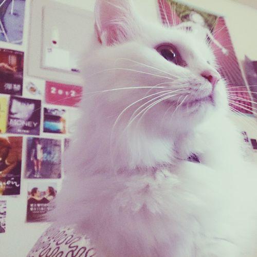 早安 Lovely Cats Cute Pets Hi!