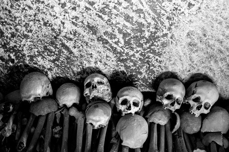 Close-up of human skulls