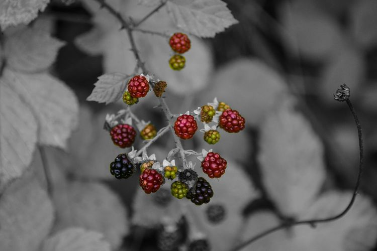 Thank you Berry much for your support and liking my pictures.... Fruit Berry Berry Fruit For The Love Of Photography Black And White Photography Colour Splash