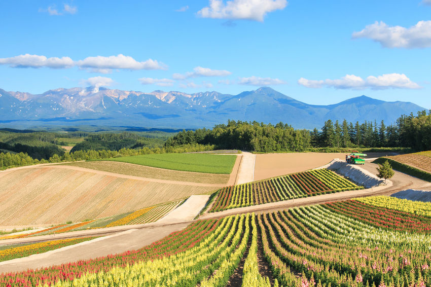 Flower garden in Kamifurano, with mountain view in Furano, Hokkaido Japan Agriculture ASIA Beauty In Nature Biei Crop  Cultivated Land Farm Field Flowers Furano Growth High Angle View Hokkaido In A Row Japan Landscape Mountain Nature Otaru Pattern Rural Scene Spring Tranquil Scene Tranquility Travel