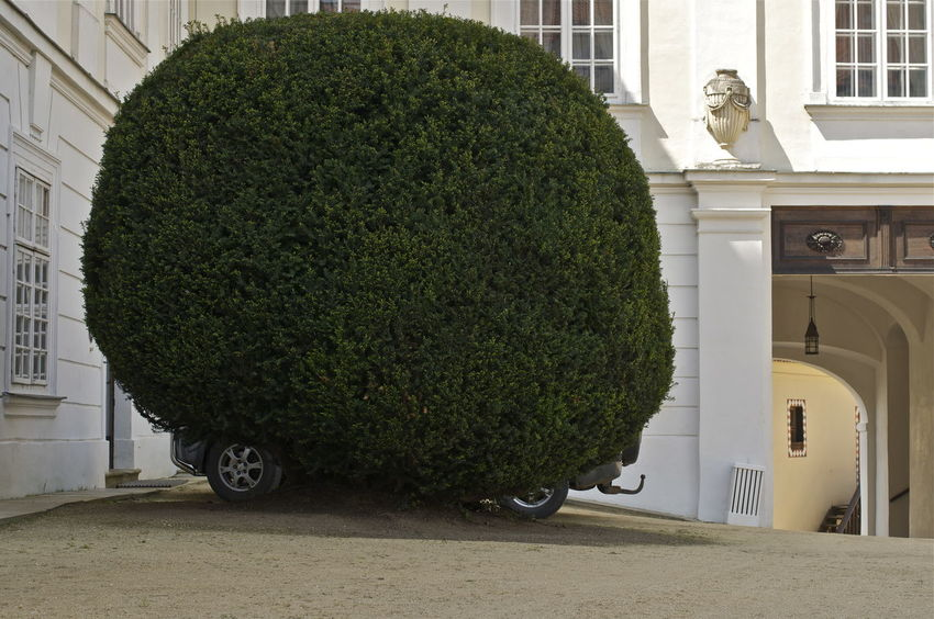 towbarbush Bush Funny Game Green Hide And Seek Hidingplace Parking Parking Lot Ready To Roll Tree Wheels You Don't See Me Sightseeing Trip Surprise! Expect The Unexpected  Growth RePicture Growth Better Look Twice Growing Better