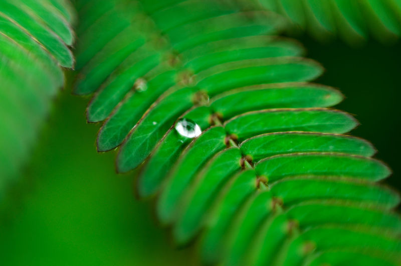 Beauty In Nature Close-up Day Focus On Foreground Freshness Frond Green Color Growth Leaf Nature No People Outdoors Plant Tendril