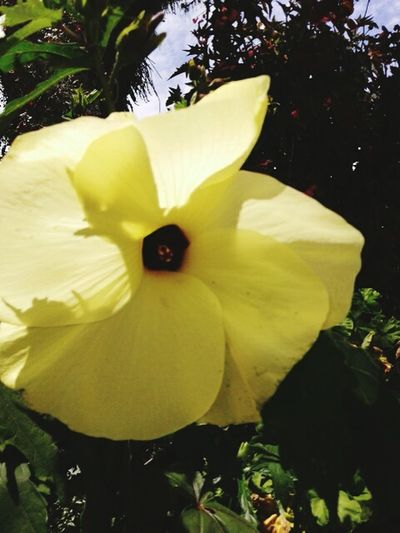 Flower Yellow Nature Plant Beauty In Nature Flower Head Fragility