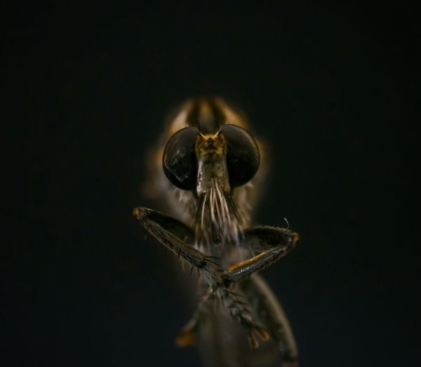 Close-Up Of Spider Against Black Background