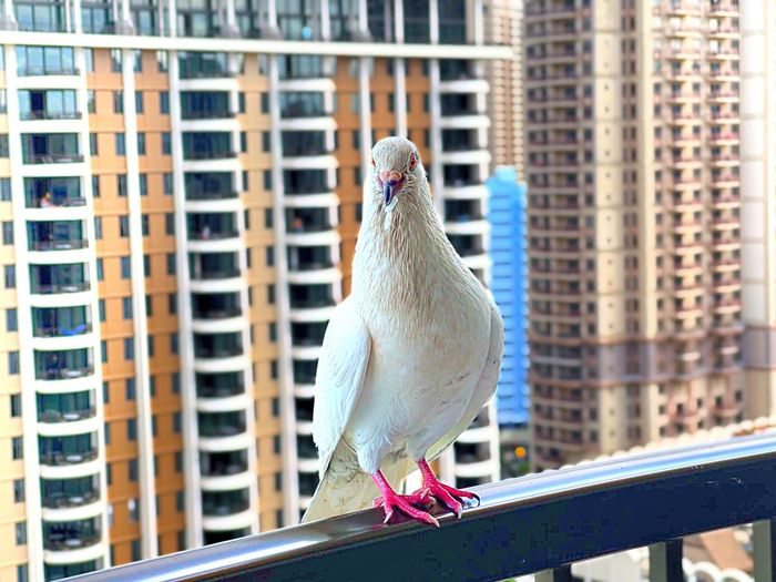 Low angle view of bird perching on railing