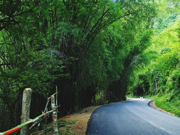 #hillstation# Tree Green Color Bamboo Grove