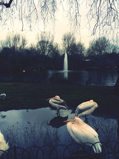 At The Park Lake Relaxing Hello England ???