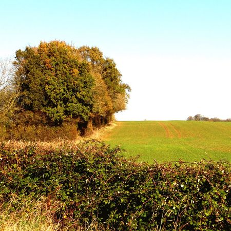 Photography Landscape Field Tree Hedgerow Rural Scene Scenics Agriculture Autumn No People Clear Sky Tranquil Scene Nature Beauty In Nature Freshness