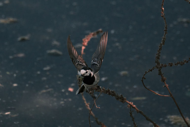 High angle view of bird flying