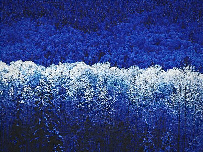 Winter 💓 Love EyeEm Nature Lover Tagsforlikes Tags4Likes Popular Photos First Eyeem Photo Exploring New Ground