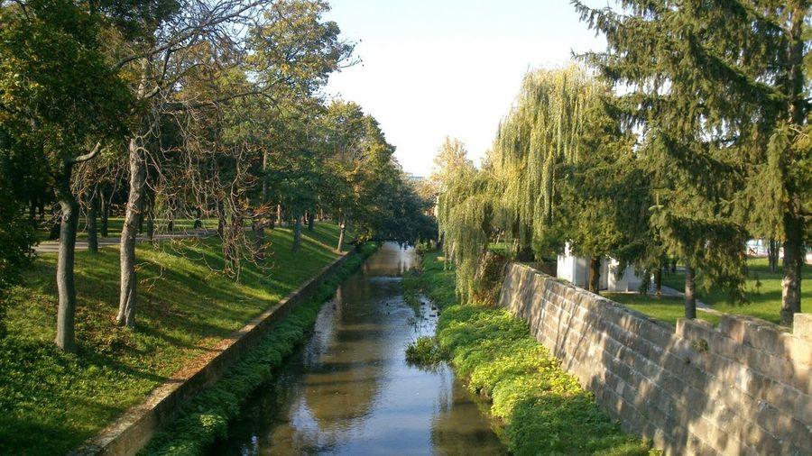 Stream along trees