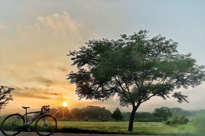 サイクリング 自転車 ロードバイク 太陽 青空 朝日 緑 空 EyeEm Nature Lover EyeEm Best Shots EyeEm Gallery Nature Beauty In Nature Ciclyng Bicycle Dramatic Sky Sunrise Sky Cloud - Sky 雲 写真好き Sunbeam 写真好きな人と繋がりたい 写真撮ってる人と繋がりたい Sun