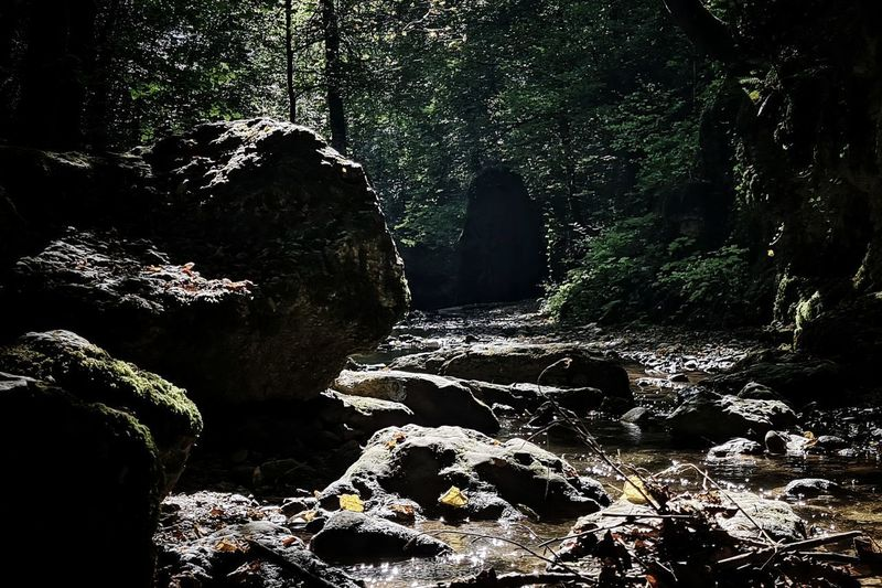 Rocks and trees in forest