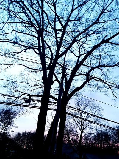 Branch Silhouette Sky Bare Tree