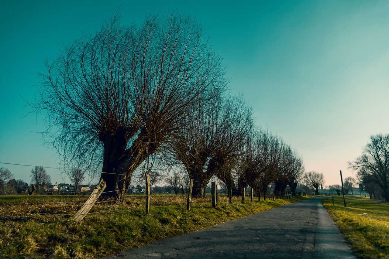 ROAD AMIDST TREES ON FIELD AGAINST BLUE SKY