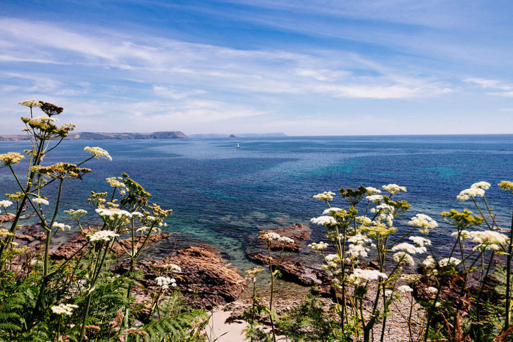 Cornwall Beach Ocean View Seascape Photography Beauty In Nature Blue Cloud - Sky Cornwall Day Flower Flowering Plant Growth Horizon Horizon Over Water Land Nature No People Outdoors Plant Scenics - Nature Sea Seascape Sky Tranquil Scene Tranquility Water