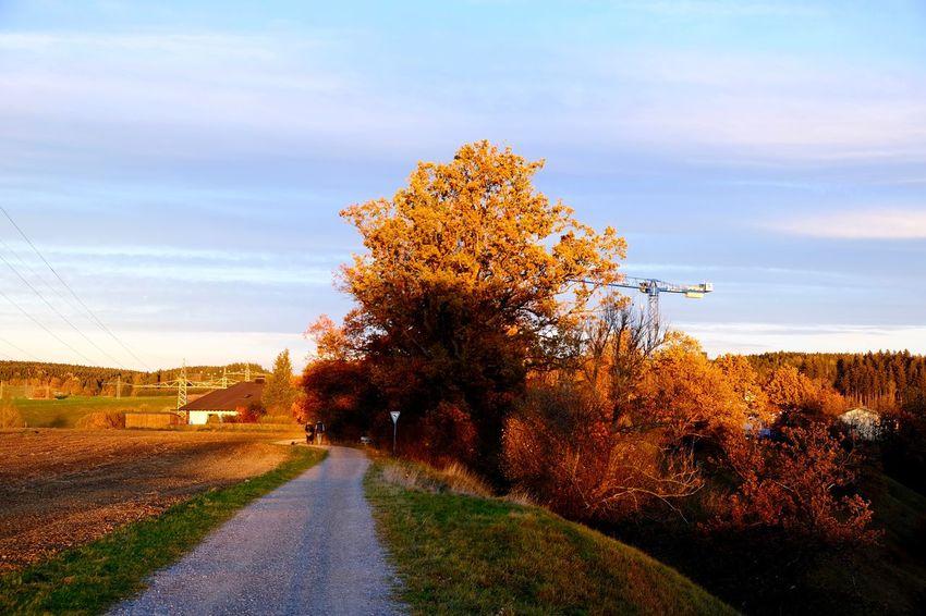 Tree Road Autumn The Way Forward Cloud - Sky Landscape Orange Color Beauty In Nature Outdoors Direction Autumncolors🍁 Eveningsun Schongau Onmywayhome