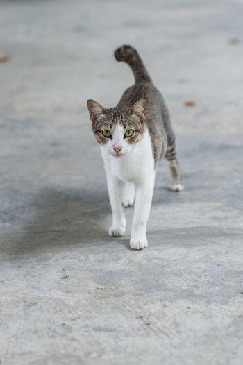 Portrait of cat standing on shore