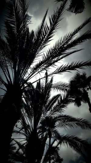 Myprofile Mypictures Professionalphotography Photographer Followme MyPhotography Nature_collection Palm Trees