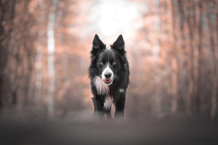 Portrait of dog running