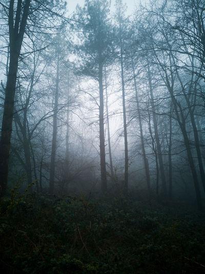 Tree Branch Fog
