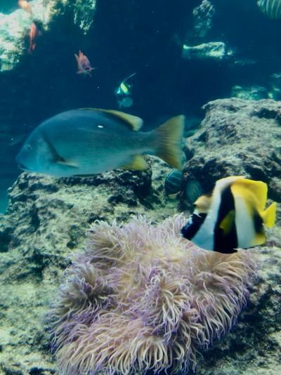 Sea Animal Animal Themes Underwater Water Animals In The Wild Sea Life Nature Fish Marine