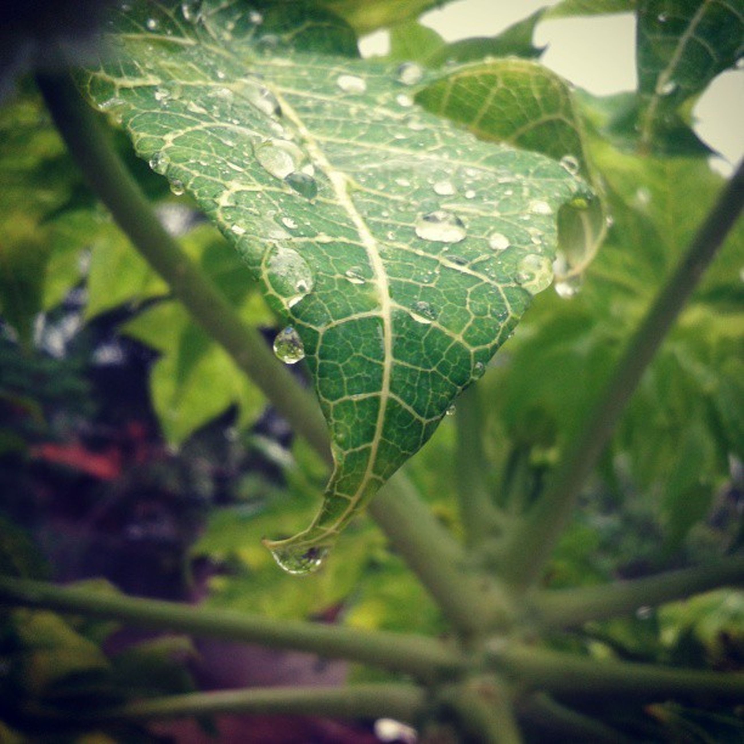 drop, leaf, close-up, focus on foreground, green color, water, wet, spider web, nature, plant, fragility, growth, selective focus, dew, beauty in nature, leaf vein, day, insect, outdoors, no people