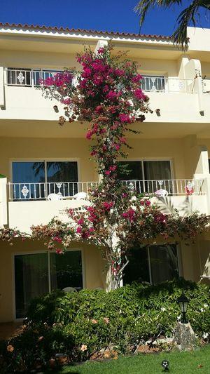 Tree of flowers. Flowerporn Tree Everyday Joy Vacation