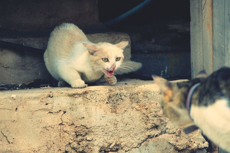 Angry cats on steps