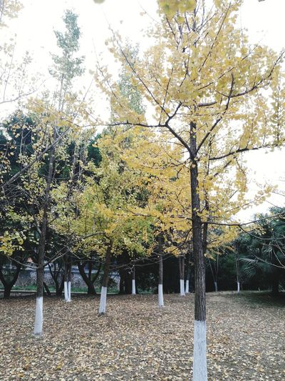 Morning in fall Tree Outdoors No People Beauty In Nature Sky Nature Autumn